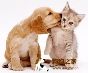 猫伪狂犬病的症状及防治方法图片