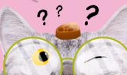 猫咪竟然是个名符其实的大近视?
