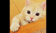 橘猫平常吃什么猫粮 好猫粮好不好