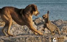 宠物抓咬受伤 慎防狂犬病感染