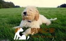 全英最幸福的狗 让狗狗嘴角上扬