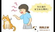 被骂还这么跩?!猫咪撇头是什么意思?