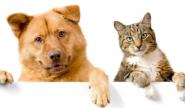 如何让狗狗和猫成为朋友 8个方法可以做到