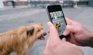 如何给你的狗拍最好的照片