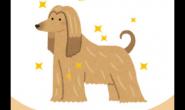 狗狗毛发的日常护理学起来(梳毛篇)