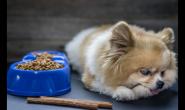 肾病狗狗的早期照护 延缓病程