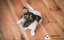  五个小技巧让狗狗独自在家也能乖乖的