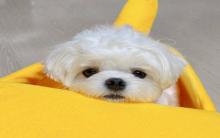 小狗狗平常吃什么营养好 好狗粮怎么样