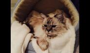 冬天要怎么养好猫咪