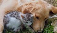 狗狗过敏竟然是不治之症?