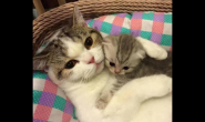 如何护理刚生产完的猫咪