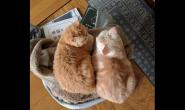 养好猫咪需要做哪些事情