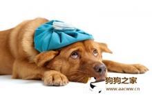 狗狗健康警讯 犬疾病常见症状
