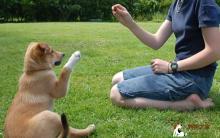 训练宠物狗狗九大要点