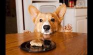 狗狗吃完饭后要洗碗吗