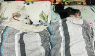 """睡觉惊见""""狗儿盖棉被甜笑""""陪女儿入睡 爸傻眼:那是我的位置"""