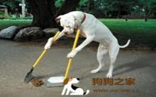 狗室内、外排便训练教战手则