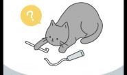 刷牙是需要练习的 猫咪这样刷才是对的!