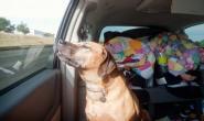治疗狗狗晕车病 这些是你可以做的事情