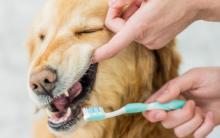 清洁老年犬牙齿的6个技巧