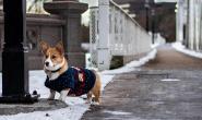 最爱雪的10种狗狗 冬天可以和这些狗狗一起玩了
