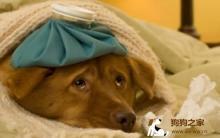 狗狗冬天注意 易患疾病预防
