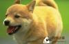 狗狗的口腔护理和保健