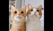 什么猫粮适合橘猫吃 好猫粮好不好