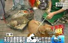 流浪狗认养活动 居民与爱狗人士爆冲突