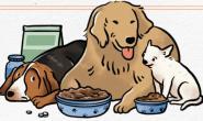缓解狗狗肠胃不适—非常时期饮食呵护狗狗肠胃道