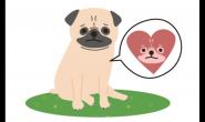 冬天到了,狗狗心脏病?你一定要知道的宠物冬天好发疾病(下篇)
