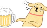 猫狗万万不可喝酒 借酒消愁!