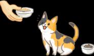 从小多尝试 猫咪长大不挑食!