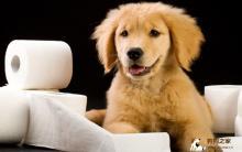 训练狗狗上厕所 定点大小便 时间管理到位