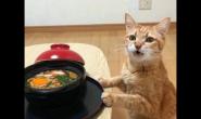 给猫咪喂食要用什么方法
