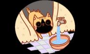 猫猫减敏训练3招搞定!放松洗澡趣~