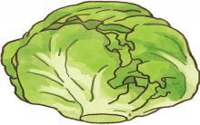 肥胖猫狗救星 高纤低热量最强减肥蔬菜登场!