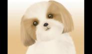 养了泰迪犬 引发深思:人类为什么喜欢养宠物?