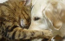 猫狗步入高龄期 老化常见疾病
