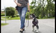 如何为您的狗狗选择正确类型的狗狗背带