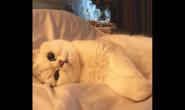 想养好猫咪要怎么做才行