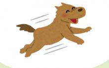 狗狗喜欢飞扑,简单3招改掉狗狗飞扑的恶习!