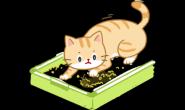 猫咪如厕五步骤!挖、拉、闻、盖、逃