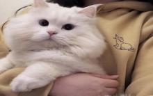 猫咪拉肚子了该怎么办