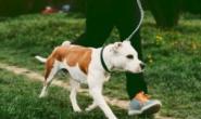 慢跑或跑步对狗安全吗?
