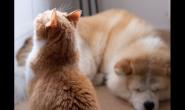 猫猫狗狗罹癌不要怕,积极治疗与照护降低复发率!