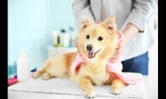 翻开皮毛一探究竟 有这些征兆表示狗狗皮肤出问题啦!