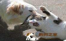 惊!狂犬病重现台湾 预防措施'报吼哩灾'