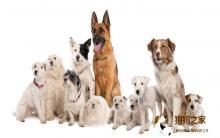 狗狗吃多少 浅谈狗喂食分量