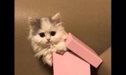 小猫咪每天的猫粮喂食次数
